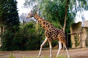 melbourni_zoo